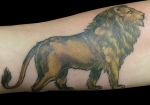 arm lion color